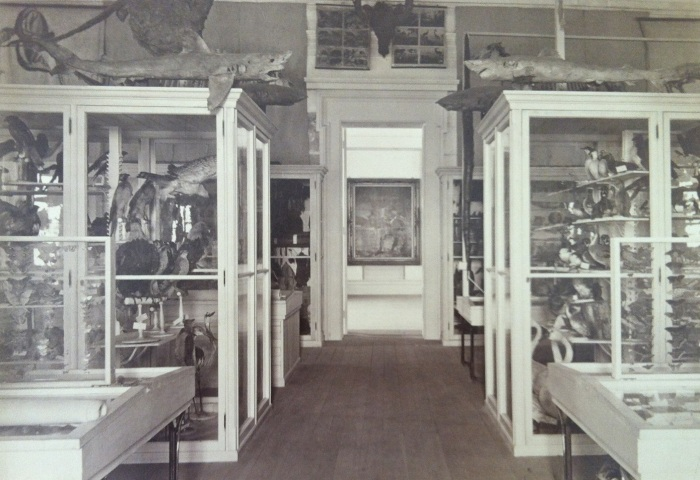 The Jenks Museum of Natural History and Anthropology in all its (former) glory. Courtesy of Brown University Archives