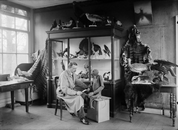 Dutch taxidermist and bird photographer Paul Louis Steenhuizen (1870-1940), mounting a Bonobo in his workshop in the Zoo of the Royal Zoological Society Natura Artis Magistra in Amsterdam, 1918.