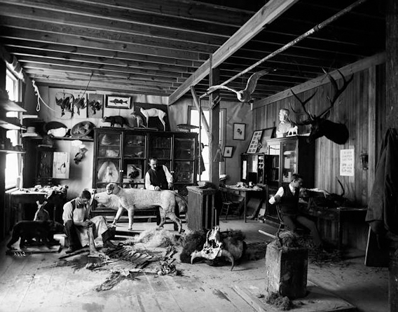 William Temple Hornaday (center), Taxidermist and Zoo Keeper, Andrew Forney, and another unidentified man, working in the taxidermists' laboratory located in a shed in the South Yard behind the Smithsonian Institution Building. Courtesy Smithsonian Institution Archives.