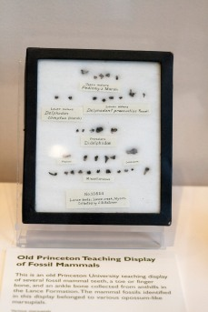 A display from the Yale Peabody Museum originally from Princeton's collections