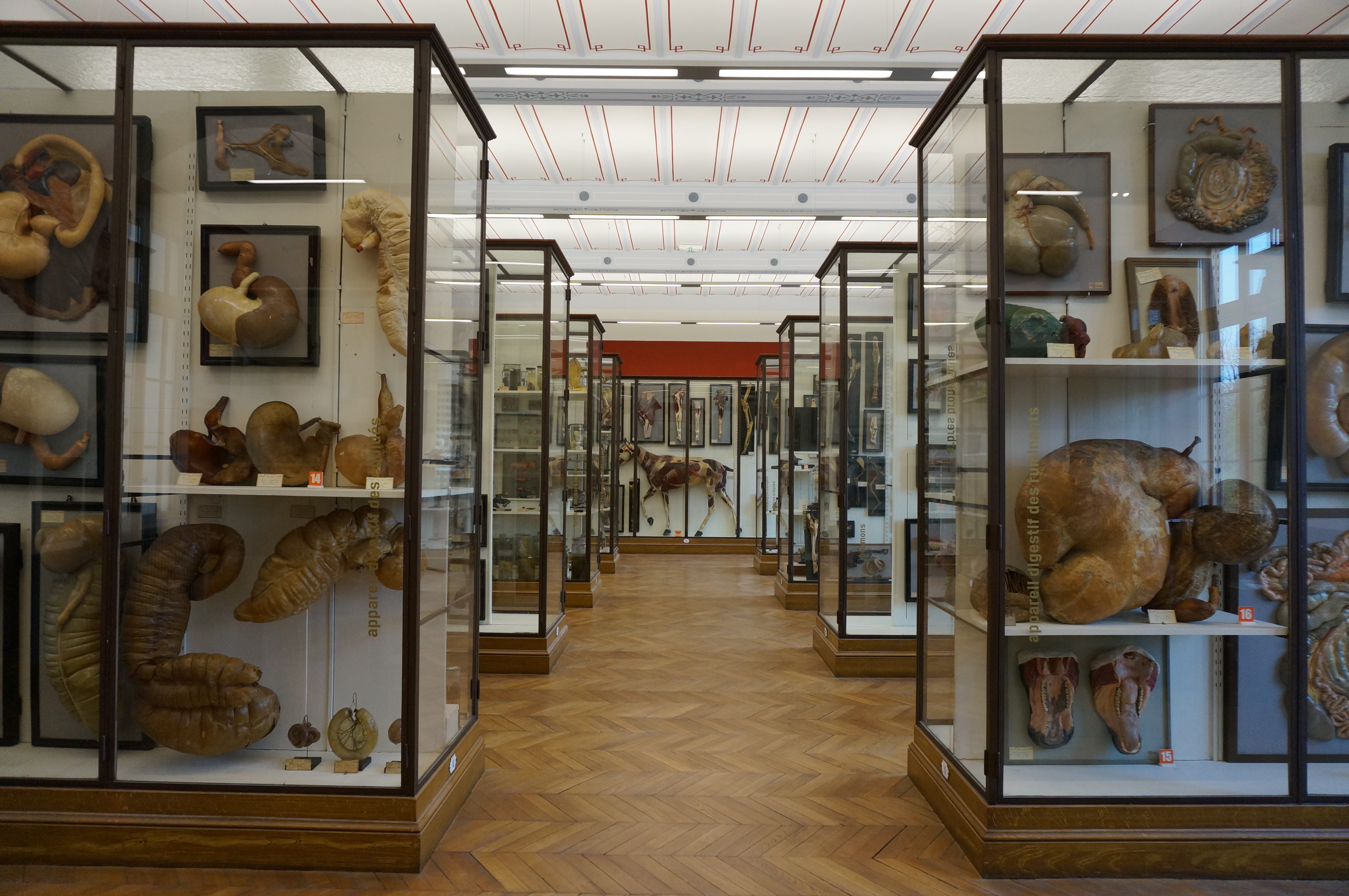 A Natural History Tour of Paris – The Jenks Society Presents THE ...