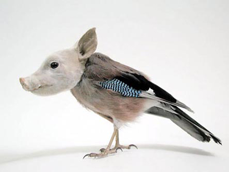 Misfits (pig/bird), from a series by Thomas Grünfeld that juxtaposes real and imaginary and references wolperfinger, a type of fable from southern Germany.
