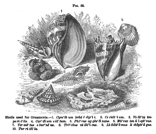 Shell illustration from A Popular Zoology (1887), a textbook written by Jenks.